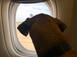 How to Travel Abroad With A Dog