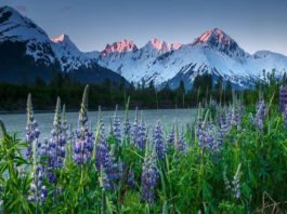 How Can You Travel to Alaska in 2020
