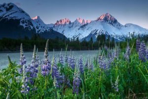 How Can You Travel to Alaska in 2020?
