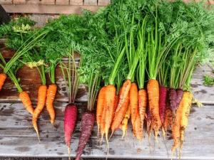 Root Vegetables superfood