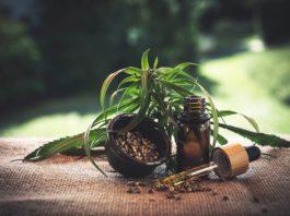 Top 5 Cannabis CBD Companies in 2020