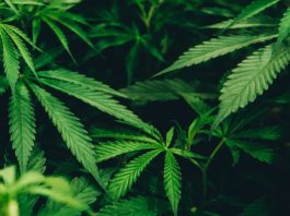 8 Prescription Drugs That Weed Could Potentially Replace