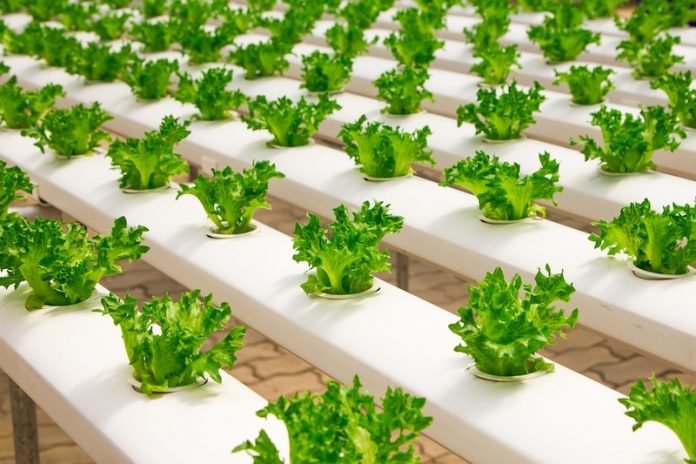 Hydroponic Garden DIY Guide - Tips and Systems for Perfect Hydroponic Garden